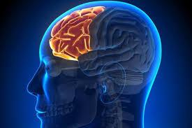 大腦前額葉